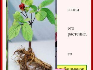Проверь себя. Назови это растение. Что интересного о нём ты узнал? Венерин ба