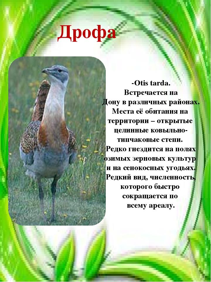 Дрофа -Otis tarda. Встречается на Дону в различных районах. Места её обитания...
