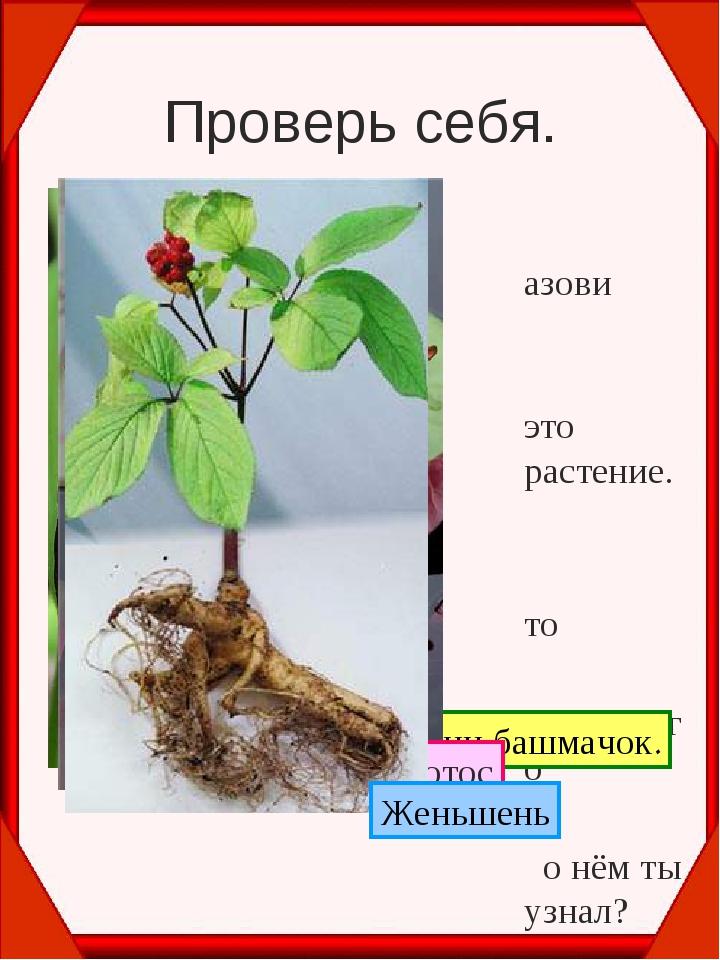 Проверь себя. Назови это растение. Что интересного о нём ты узнал? Венерин ба...