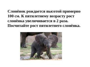 Слонёнок рождается высотой примерно 100 см. К пятилетнему возрасту рост слонё
