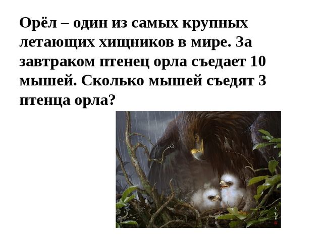 Орёл – один из самых крупных летающих хищников в мире. За завтраком птенец ор...