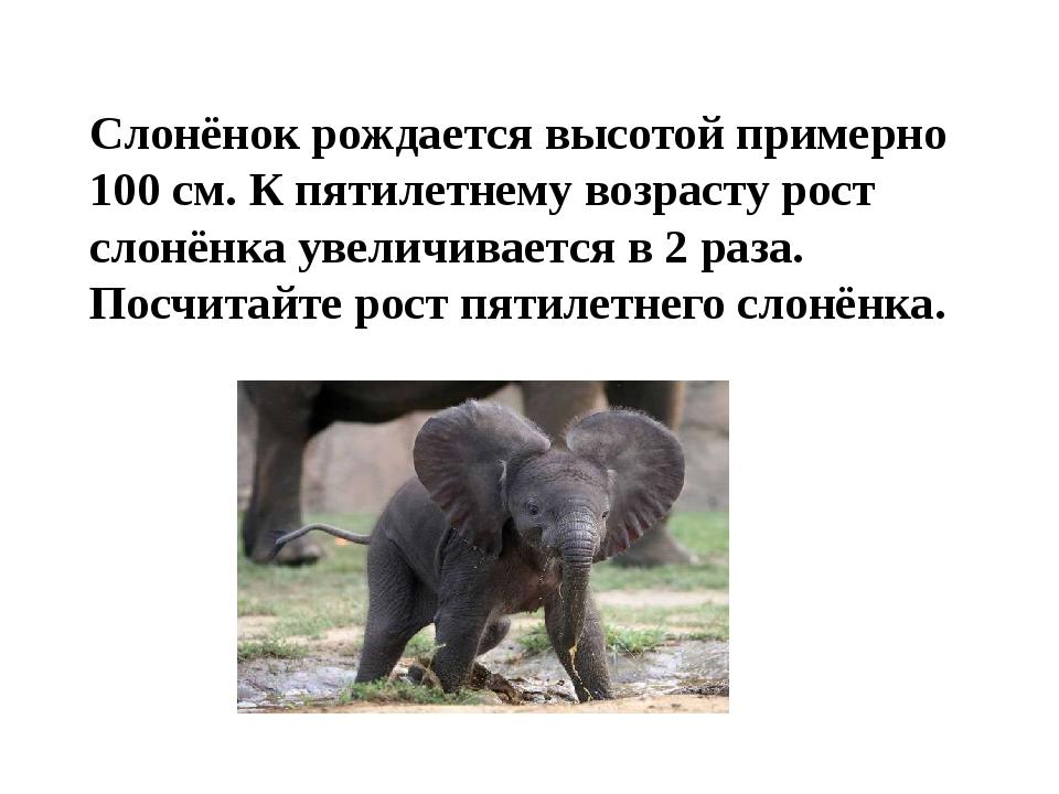 Слонёнок рождается высотой примерно 100 см. К пятилетнему возрасту рост слонё...