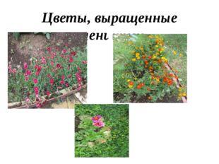 Цветы, выращенные учениками