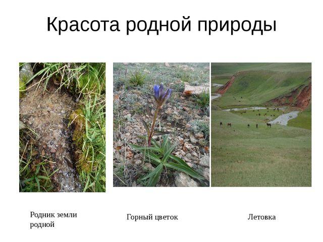 Красота родной природы Родник земли родной Горный цветок Летовка