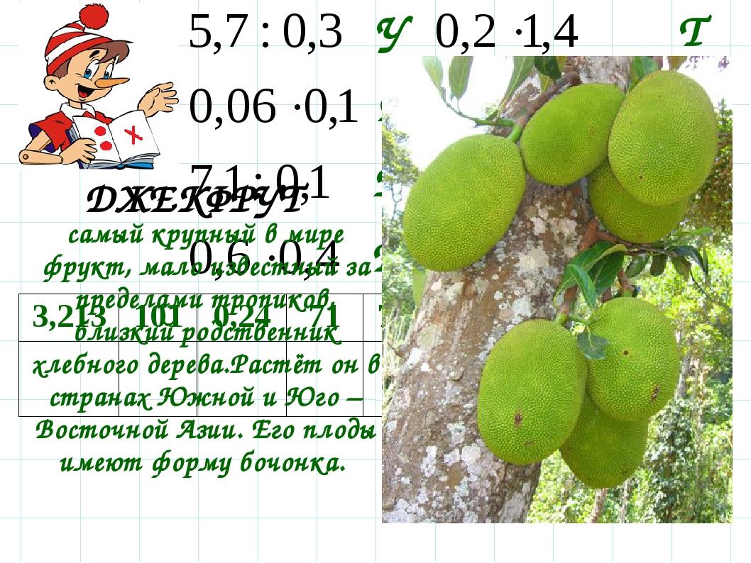 Д Р Т Е У Ф К Ж самый крупный в мире фрукт, мало известный за пределами тропи...