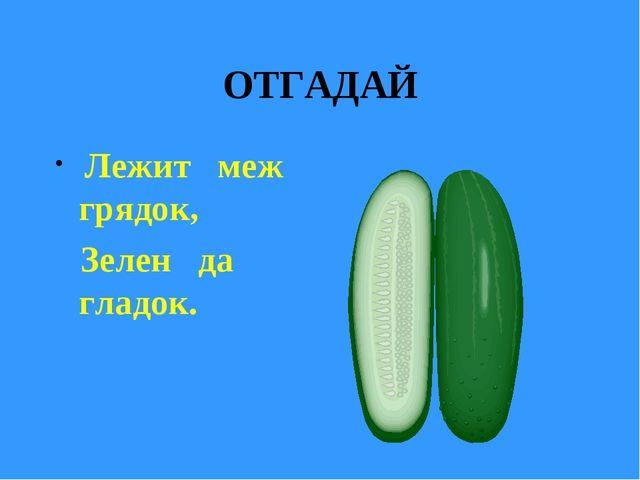ОТГАДАЙ Лежит меж грядок, Зелен да гладок.