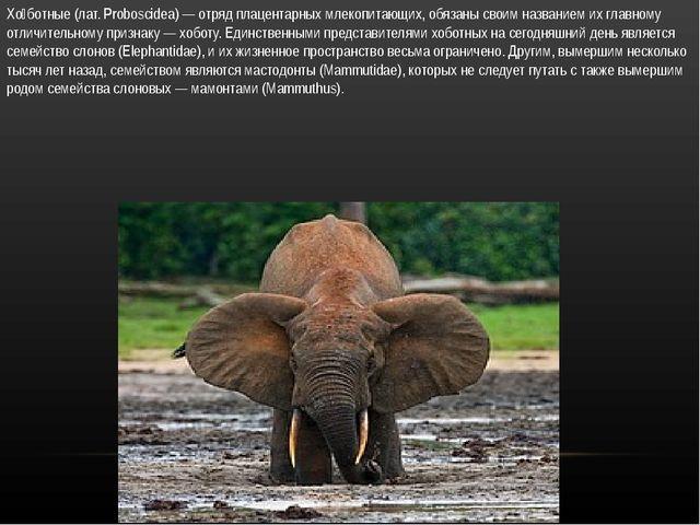 Хо́ботные (лат. Proboscidea) — отряд плацентарных млекопитающих, обязаны свои...