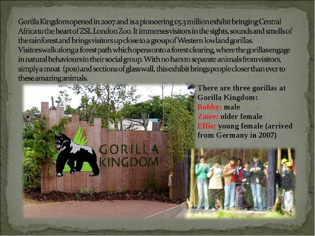 There are three gorillas at Gorilla Kingdom: Bobby: male Zaire: older female...