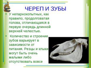 ЧЕРЕП И ЗУБЫ У непарнокопытных, как правило, продолговатая голова, отличающая