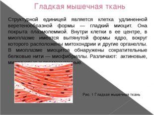 Гладкая мышечная ткань Структурной единицей является клетка удлиненной верете