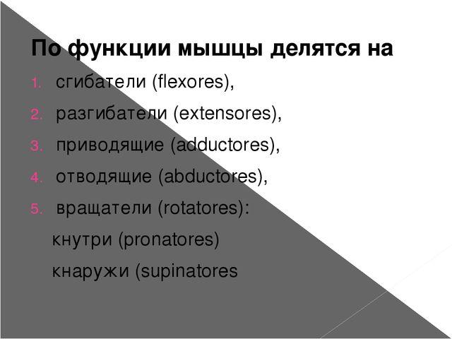 По функции мышцы делятся на сгибатели (flexores), разгибатели (extensores), п...