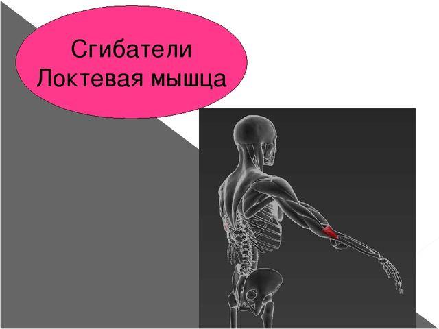 Сгибатели Локтевая мышца