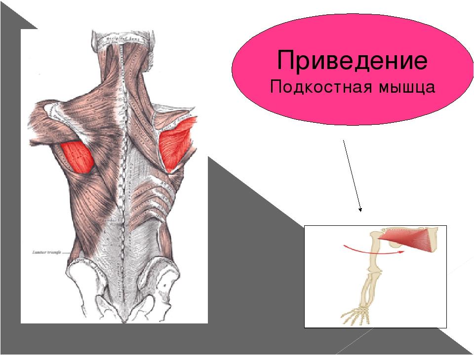 Приведение Подкостная мышца