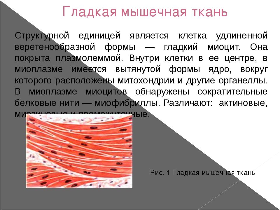 Гладкая мышечная ткань Структурной единицей является клетка удлиненной верете...