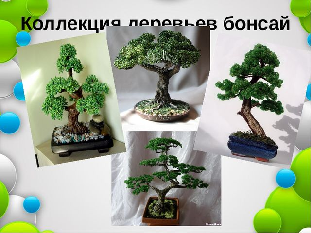Коллекция деревьев бонсай