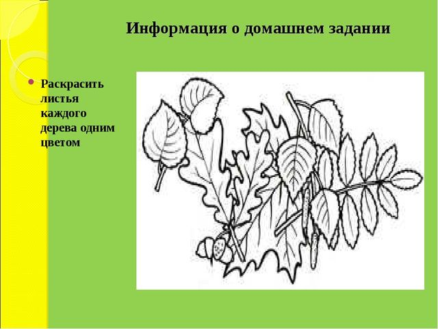 Информация о домашнем задании Раскрасить листья каждого дерева одним цветом
