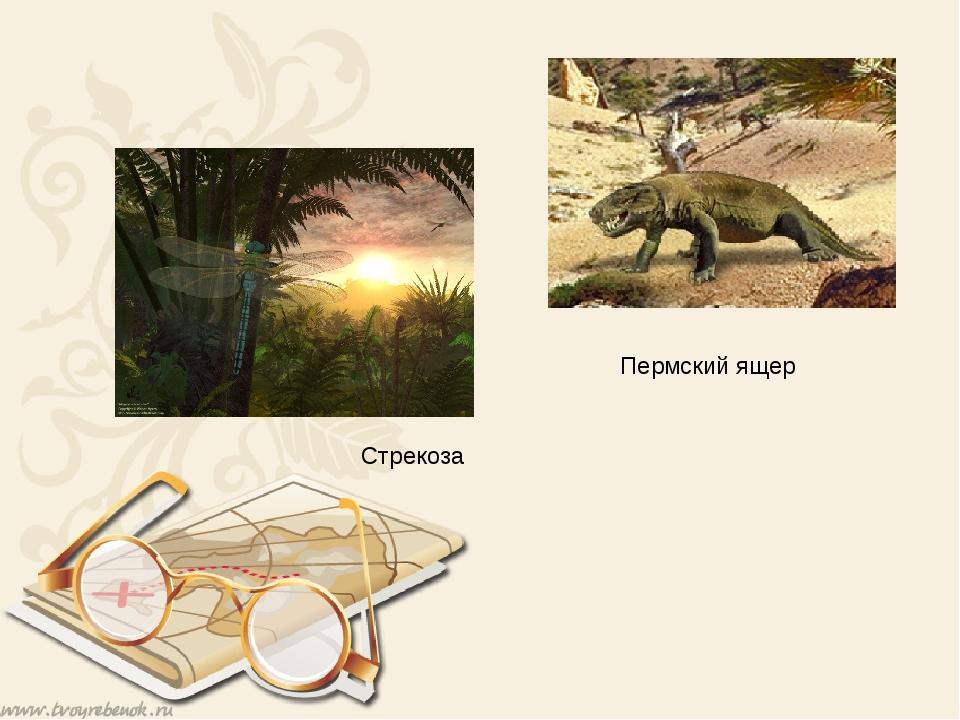 Пермский ящер Стрекоза