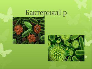 Бактерияләр