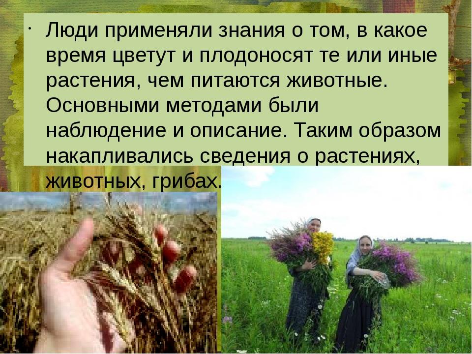 Люди применяли знания о том, в какое время цветут и плодоносят те или иные р...