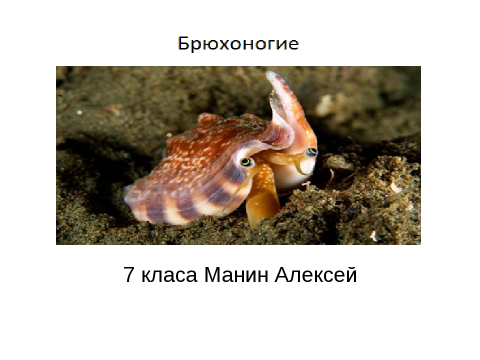 Презентацию подготовил ученик 7 класа Манин Алексей