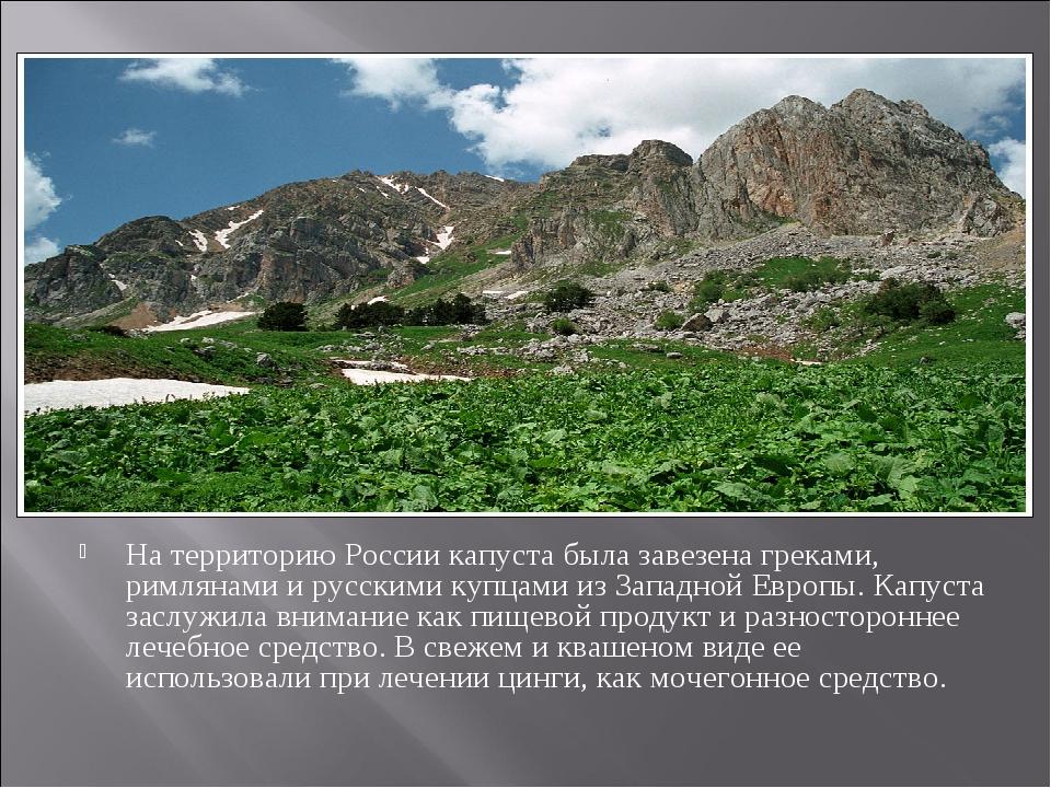 На территорию России капуста была завезена греками, римлянами и русскими куп...