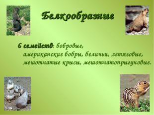 Белкообразные 6 семейств: бобровые, американские бобры, беличьи, летяговые, м