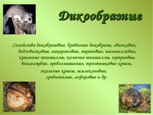 Дикообразные Семейства дикобразовые, древесные дикобразы, свинковые, водосвин