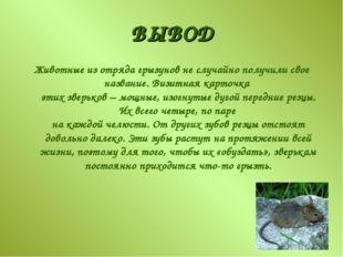 ВЫВОД Животные из отряда грызунов не случайно получили свое название. Визитна