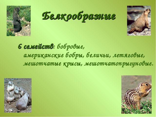 Белкообразные 6 семейств: бобровые, американские бобры, беличьи, летяговые, м...