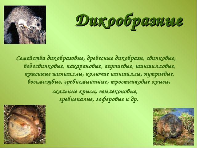 Дикообразные Семейства дикобразовые, древесные дикобразы, свинковые, водосвин...