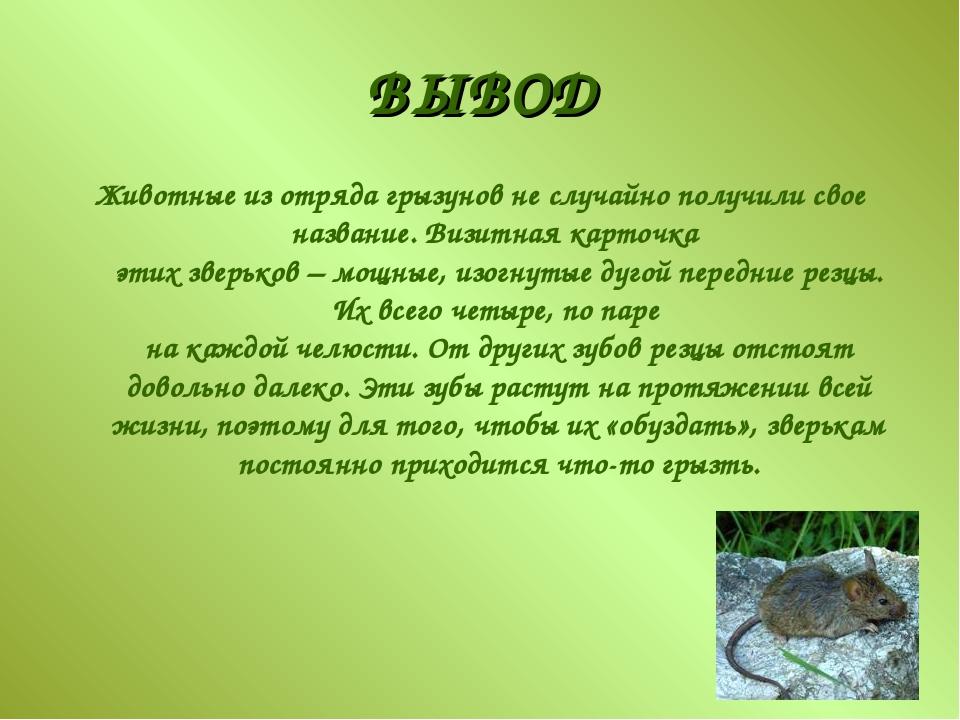 ВЫВОД Животные из отряда грызунов не случайно получили свое название. Визитна...