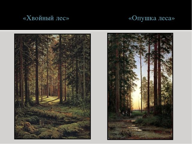 «Хвойный лес» «Опушка леса»