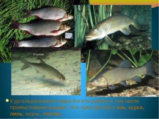Кургальджинские озера богаты рыбой, в том числе промысловыми видами. Это преж