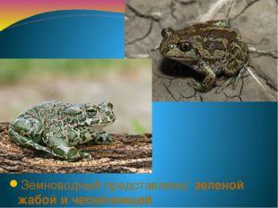 Земноводный представлены: зеленой жабой и чесночницей