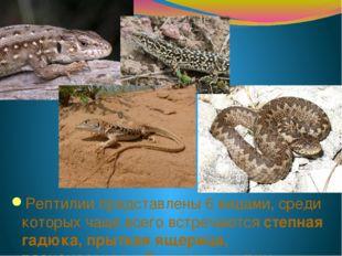 Рептилии представлены 6 видами, среди которых чаще всего встречаются степная