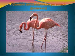 Символ заповедника – розовый фламинго