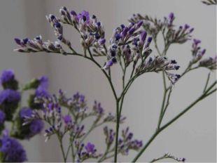 Выделяется особая группа растений, приспособившихся к жизни на сильнозасоленн