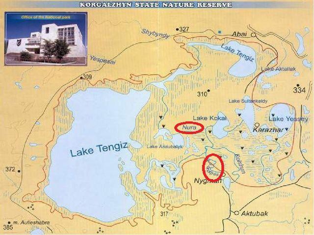 Крупнейшие в Северном и Центральном Казахстане озера – Тенгиз и Кургальджин –...