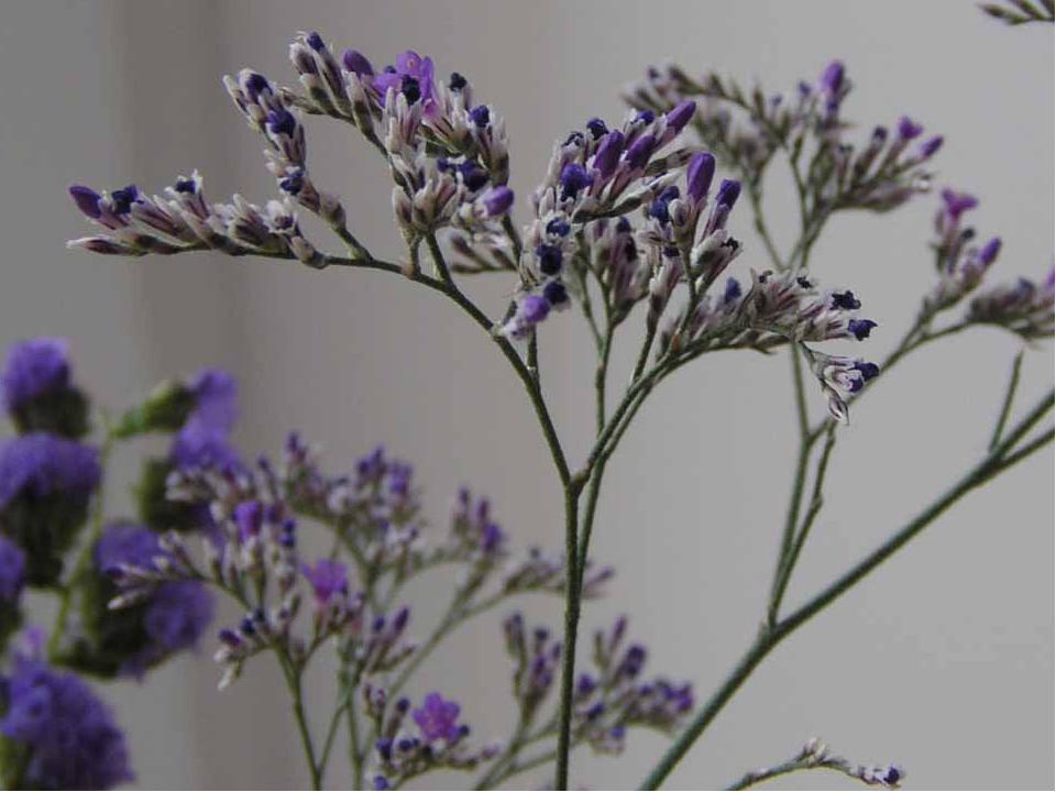 Выделяется особая группа растений, приспособившихся к жизни на сильнозасоленн...