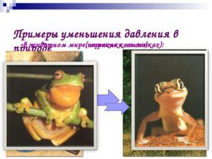Примеры уменьшения давления в природе -в животном мире(широкие копыта): -в ж