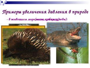 Примеры увеличения давления в природе - в животном мире(жала, хоботки): - в ж