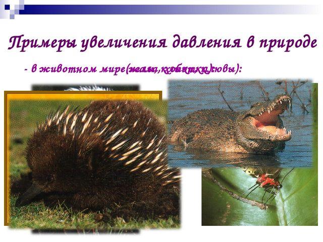 Примеры увеличения давления в природе - в животном мире(жала, хоботки): - в ж...