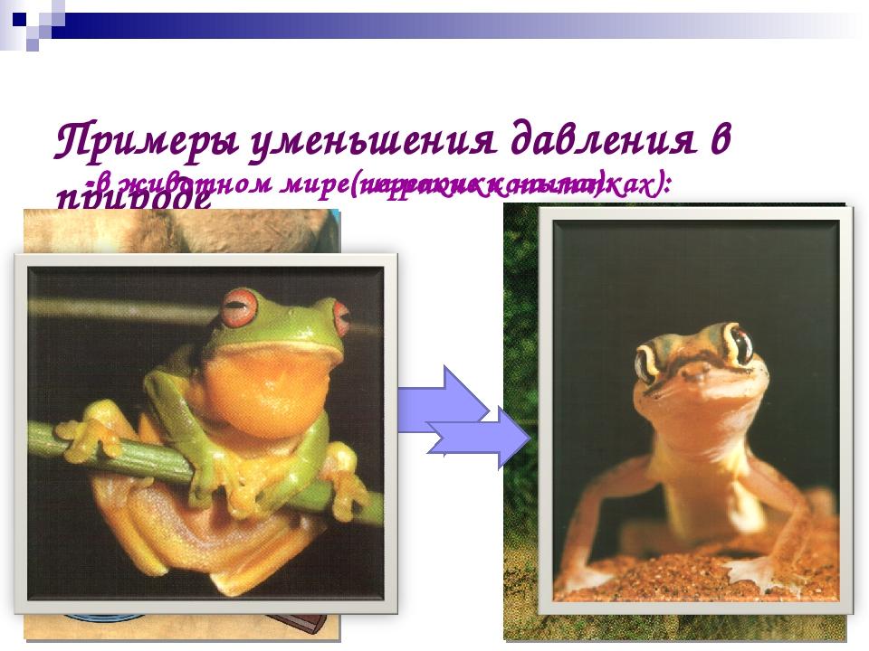 Примеры уменьшения давления в природе -в животном мире(широкие копыта): -в ж...