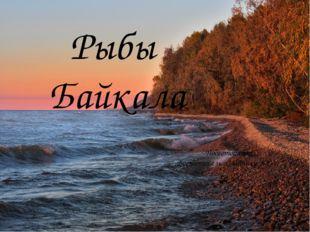 Рыбы Байкала Подготовила: Воспитатель Славнику В.Ё-г.