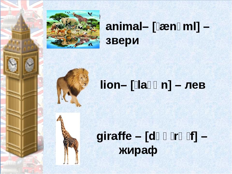 animal– [ˈænɪml] – звери lion– [ˈlaɪən] – лев giraffe – [dʒəˈrɑːf] – жираф