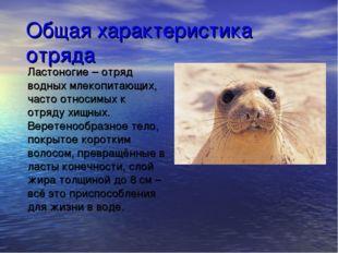 Общая характеристика отряда Ластоногие – отряд водных млекопитающих, часто от