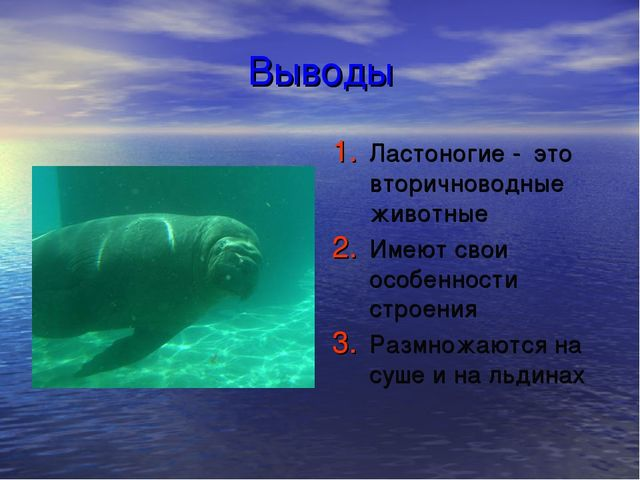 Выводы Ластоногие - это вторичноводные животные Имеют свои особенности строен...