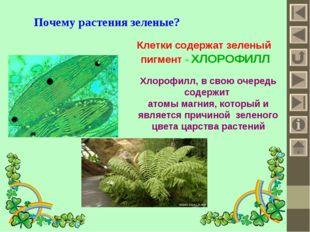 Почему растения зеленые? Клетки содержат зеленый пигмент - ХЛОРОФИЛЛ Хлорофил