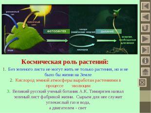 Космическая роль растений: Без зеленого листа не могут жить не только растени