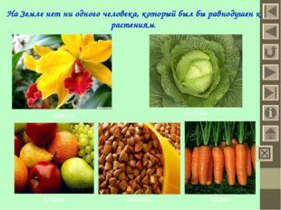 На Земле нет ни одного человека, который был бы равнодушен к растениям. цветы